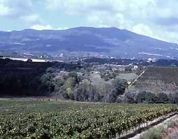 A view from Villa Matilde's vineyards