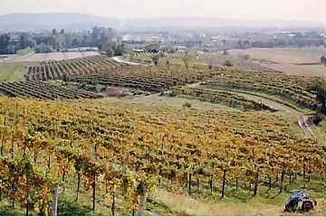 A view from Mario Schiopetto's vineyards