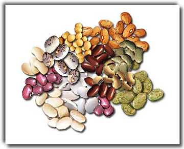 Beans: a rich and nutrient food