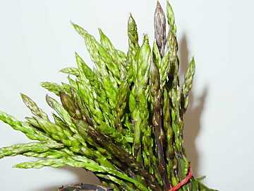 Tasty, looked for and healthy: asparaguses are appreciated since ancient times