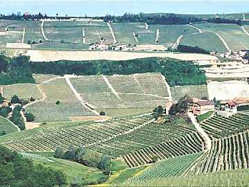 The famous Bussia vineyard at Monforte d'Alba