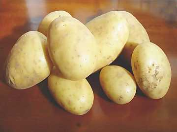 Potatoes are the most common vegetable in the world and the most important ones for human nutrition