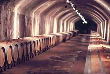 The wines aging cellar