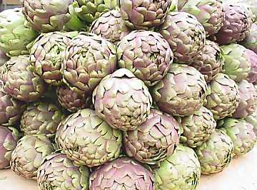 Artichokes: light, nutrient, tasty and very versatile in cooking
