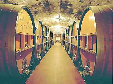 Cellar: the place where the wine ages inside casks