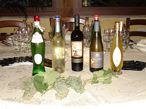 The five wines of Fazi Battaglia tasted during the event and some bunches of Verdicchio